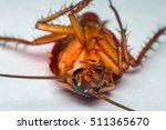 macro of cockroach insects of... | Shutterstock . vector #511365670