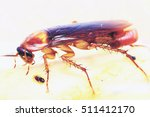 brown cockroach with cockroach... | Shutterstock . vector #511412170