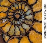 Small photo of Ammonite of Russia