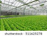 lettuce growing in greenhouse.... | Shutterstock . vector #511625278