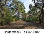 Dirt Road With Hammock Trees...