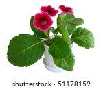 tree flowers of pink gloxinia... | Shutterstock . vector #51178159