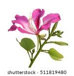 closed up pink flower  bauhinia ...   Shutterstock . vector #511819480