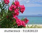 Beautiful Pink Oleander Is...