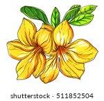 yellow adenium house flower... | Shutterstock . vector #511852504