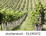 winemaking - agriculture - stock photo