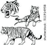 Vector Black And White Bengal...