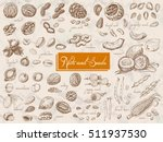 big collection of isolated nuts ... | Shutterstock .eps vector #511937530