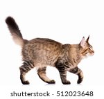 portrait of domestic black...   Shutterstock . vector #512023648