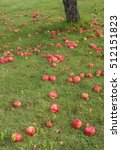 Apples Lie On The Ground...