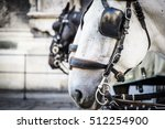 Close Up Of Horse Heads Of A...
