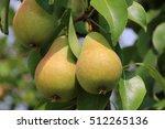 Ripe Organic Cultivar Pears In...
