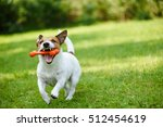 Stock photo funny dog playing with rubber toy bone in jaws 512454619