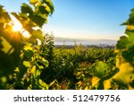 sunrise on fields of vineyards...