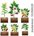 different kinds of plant in... | Shutterstock .eps vector #512500129