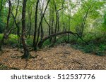 broceliande forest in brittany  ... | Shutterstock . vector #512537776