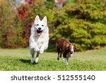 Stock photo white shepherd running dog jumping dog 512555140