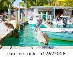 Big Brown Pelicans In Port Of...