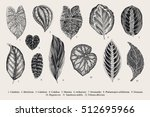 set leaf. exotics. vintage... | Shutterstock .eps vector #512695966