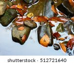 Fall Colors. Detail Of Rotten...