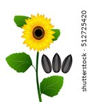 Sunflower And Sunflower Seeds...