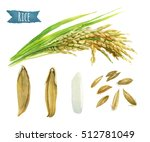 rice hand painted watercolor... | Shutterstock . vector #512781049