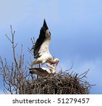Mating Stork Couple In Nest