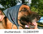 german shepherd | Shutterstock . vector #512804599