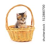 Kitten In A Basket Isolated On...