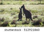 Kangaroo Mother And Joey On A...