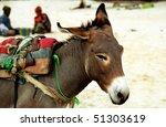 Donkey  Nouakchott  Mauritania