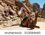 two bedouin camels rests near...   Shutterstock . vector #513064660