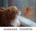 Red Cat Near A Window