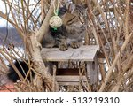 A Norwegian Forest Cat Sits On...