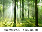 beautiful morning in the forest | Shutterstock . vector #513250048