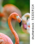 A Portrait Of A Flamingo...