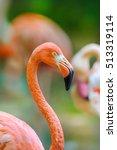 A Portrait Of A Flamingo...