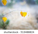 Beautiful White Frost On Autum...