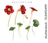 Nasturtium  Watercolor  Can Be...