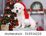 Stock photo retriever puppy in a santa claus hat puppy golden retriever asleep in front of a christmas tree 513516223