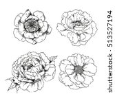 hand drawn flowers isolated on