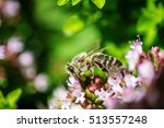 honey bee perched on a flower... | Shutterstock . vector #513557248