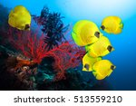 Underwater Image Of Coral Reef...