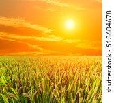 ripe rice on farmland at sunset | Shutterstock . vector #513604678