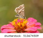 Ventral View Of A Common ...