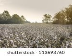 field of cotton during golden... | Shutterstock . vector #513693760
