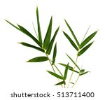 bamboo leaf isolated on white... | Shutterstock . vector #513711400