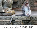 a monkey eating in the monkey... | Shutterstock . vector #513891733
