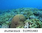 Coral Life Diving Papua New...