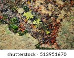 Rocks Covered With Lichen With...
